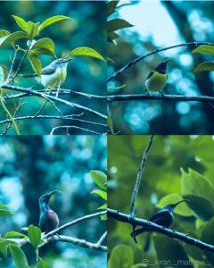 Be like Hummingbirds